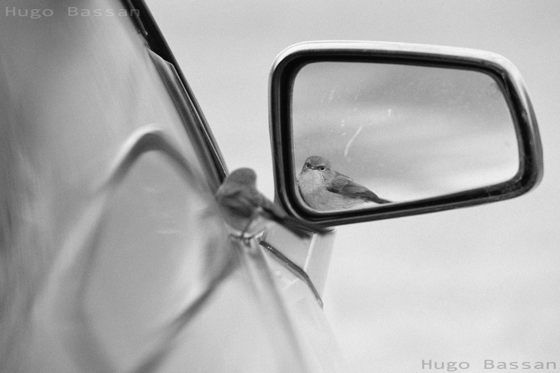 Reflet dans le miroir