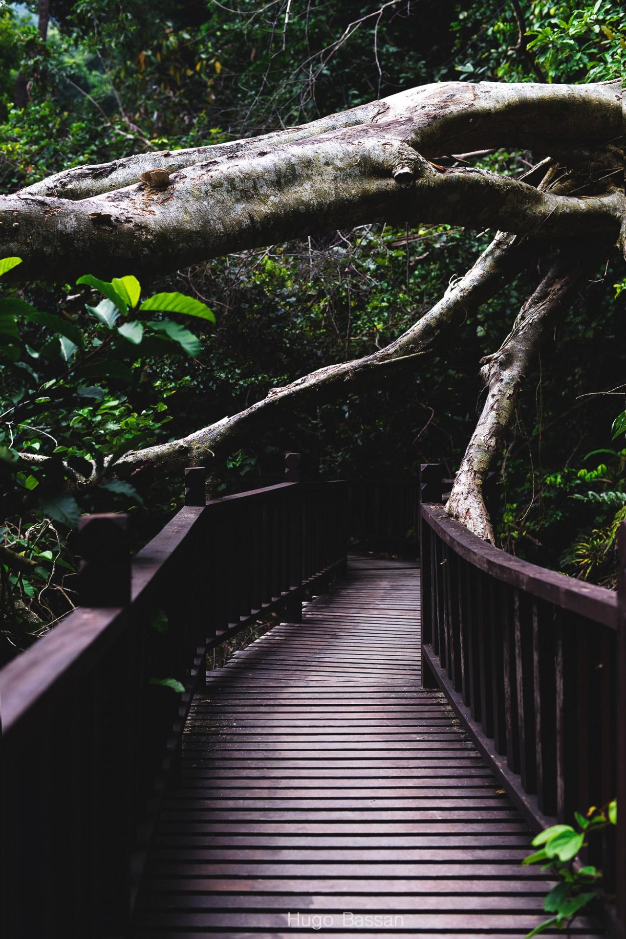 En ballade dans le Parc National de Penang
