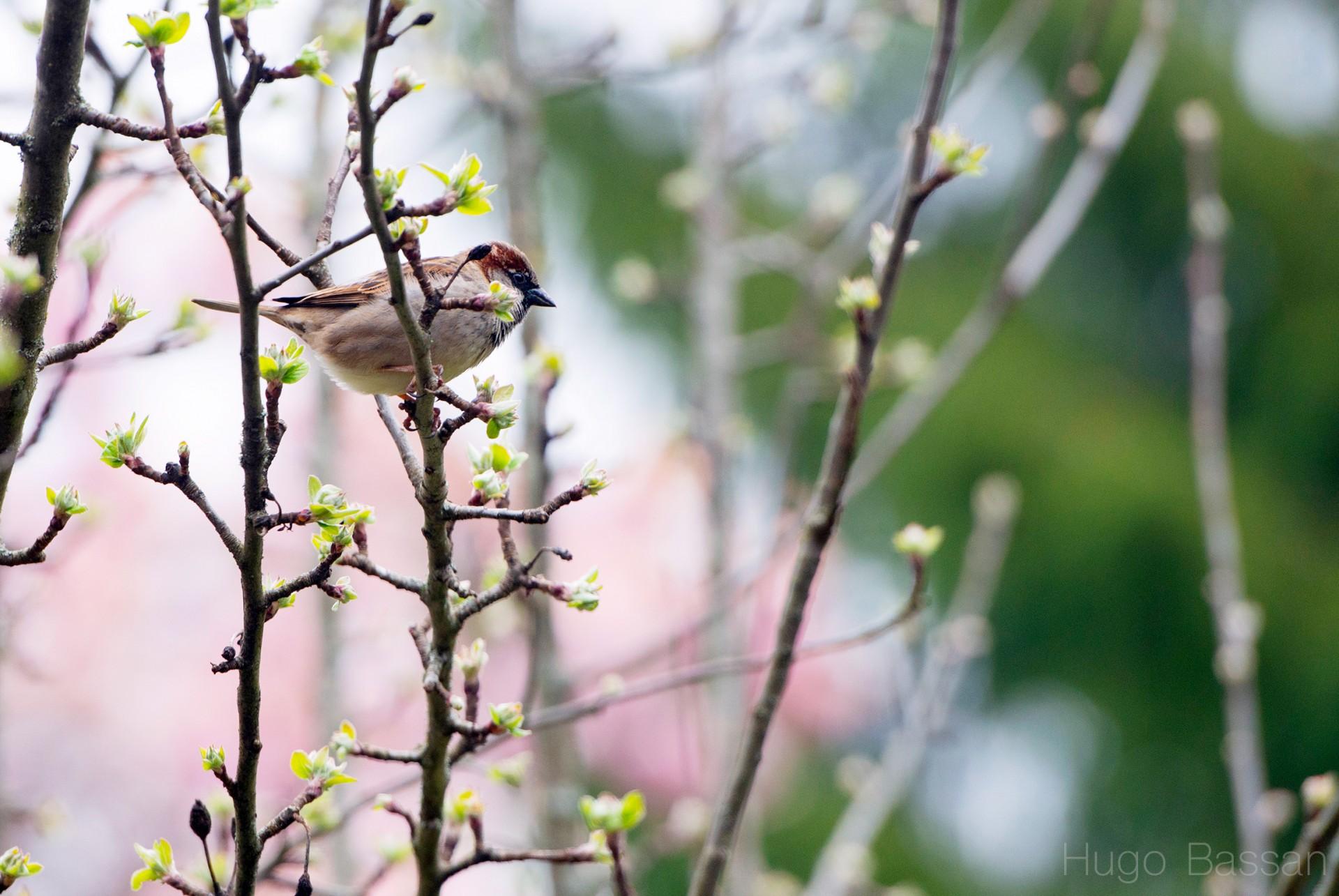 Bird from my window